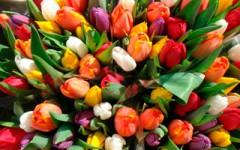Удобрение для тюльпанов